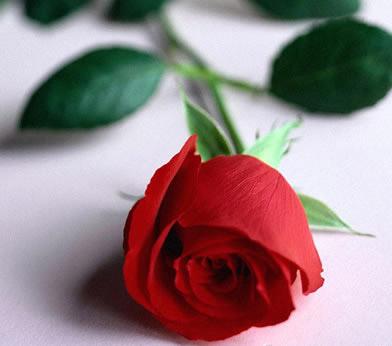 Роза в культуре разных народов