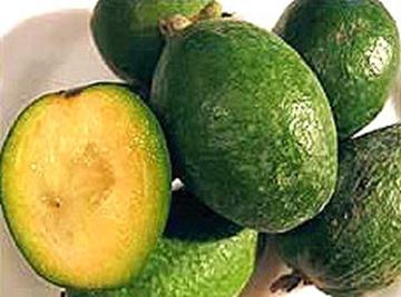 Плоды фейхоа вкусные и лечебные