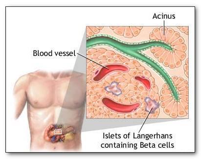 Регулирования уровня сахара в крови