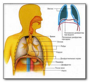 Лечение хронических заболеваний органов дыхания