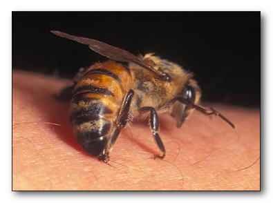 Доверьте простатит пчелам