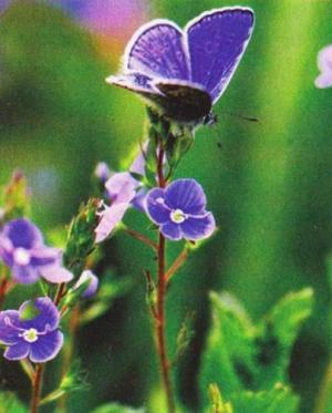 Травы и чаи при псориазе 16 самых вредных и 8 самых полезных напитков