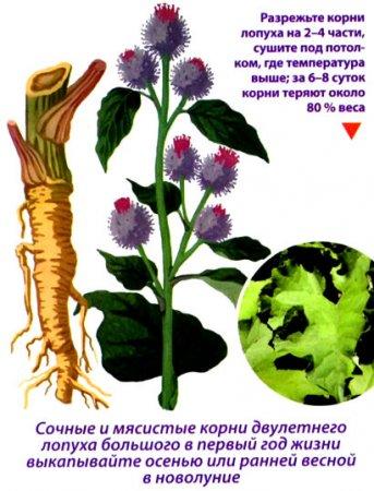 как собрать и сохранить целебные растения