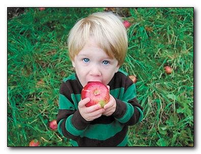 Какая польза от яблок