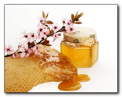Лечение язвы медом