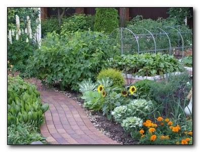 наши огороды-целая аптека