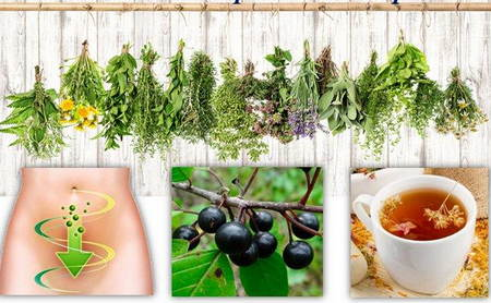 Растения для оказания первой помощи